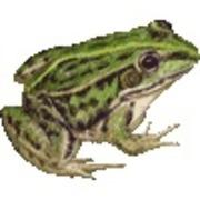 蛙は井戸の中
