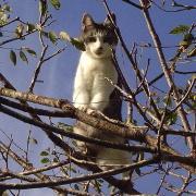チビ(仮)の外猫生活 たまに八千代に