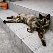 サビ猫μログ