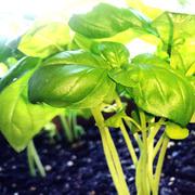 家庭菜園で自給自足すくすく写真トキメキ奮闘記