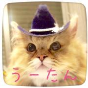 プリフワ系お散歩猫うーたんブログ