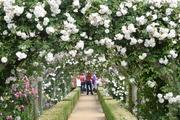 薔薇好き花好き〜アートセラピストが造る癒しの庭