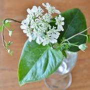 花と緑とやさしい暮らしと