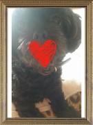 愛犬LOVEアラサーの化粧・ダイエットブログ
