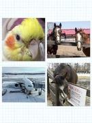 馬好き飛行機好きオカメインコ好き日記