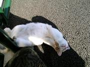 神社さんぽ -ときどきガンダムと猫-