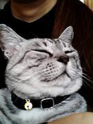 元野良のボス猫+二本足のおやじ+おはるママ