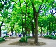 幻覚・妄想とたたかう統合失調症闘病記