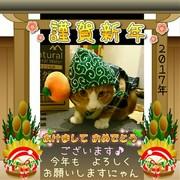 愛猫チャア♂さん依存の成長日記