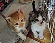 保護猫応援日記