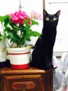 白黒猫と黒猫のブログ