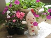 ミルク色の木蓮のブログ〜忘れものを取り戻すために〜