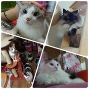 末期癌(ステージ4b)から奇跡の回復 愛猫のために生きる!