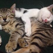 猫と平屋でスッキリと