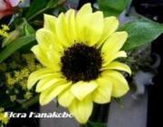 東京都杉並区阿佐谷『フローラ花工房』のインサイドレポート