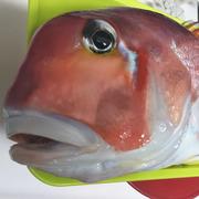 沖釣り日記(おいしいお魚が食べたい!)