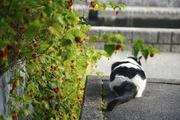 しゃごころでっしゃろ!写真家 田島源夫ブログ