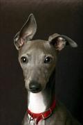 La Guerison Dog