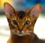ネット販売に挑戦!手づくり猫の雑貨屋さん始めました
