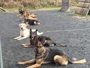 福井警察犬・家庭犬訓練所スタッフブログ