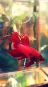 アクアリウム 熱帯魚の飼育 初心者のためのブログ
