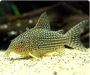 熱帯魚初心者の飼育日記