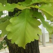 柏の葉STORY