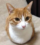 猫真〜nekoshin〜さんのプロフィール
