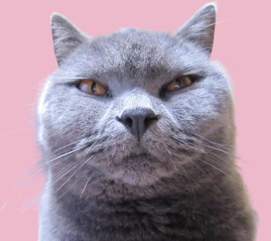 乙女猫さんのプロフィール
