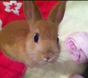 JOEDAMのウサギとインコとカラオケの呑んだくれブログ