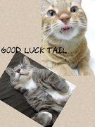 goodlucktail