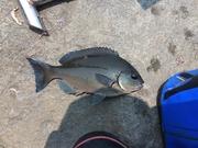 19歳のヌカ切り師! 釣りバカブログ