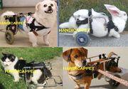 handicappet.net障害をもった犬・猫,うさぎ
