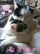 猫に癒される毎日