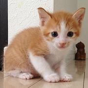 うちの猫の観察日記