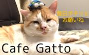 福岡 保護猫カフェ オープンまでの道のり