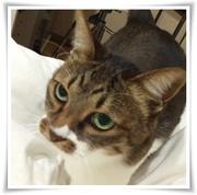 猫大好きな30代主婦の毎日愚痴日記(´・ω・`)