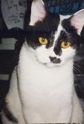 埼玉県和光市 猫専門ペットシッター ユキにゃんママ