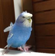 インコ好きの鳥ブログ