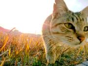 毎日が猫!ネコ!ねこ!
