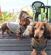 犬服屋CRAZYSEVENDOGダックス2+ボルゾイ
