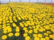 カナンテクノ株式会社 お花と苗の情報