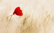 「情熱」という名の導火線を見つけるツール