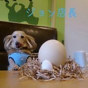 柴又ドッグカフェジョンのブログ