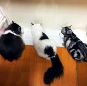 モフモフ猫'Sとの 生活