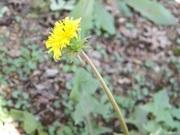 たんぽぽの花のように〜再発乳がん共存記