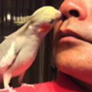 鳥と暮らす