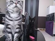 オススメしたいものを伝えるシマシマ黒猫の部屋