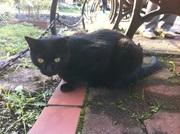 黒猫さんのプロフィール