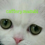 cattery.musubi-まんまる日和-